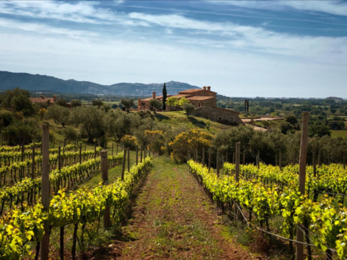 Bodega Espelt: visita los viñedos